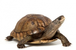 Turtle Trading Rules Trend Following Investing based on 20  55 Day Highs